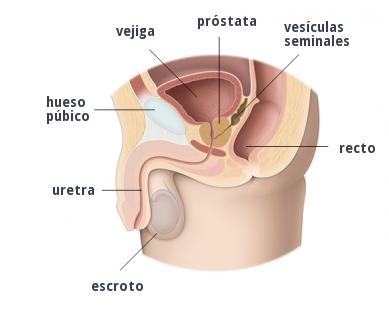 Cáncer De Próstata: Señales Y Síntomas